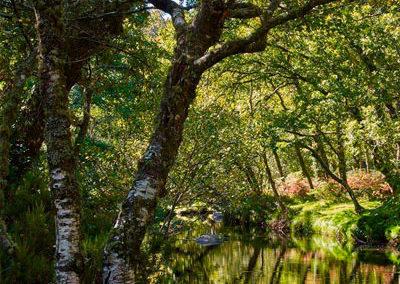 bosque-ribeira